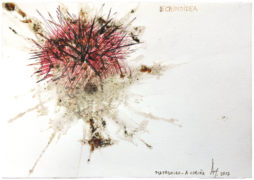 smashed sea urchin, ink/paper 14,8 x 21 cm - 5.82 x 8.26 in